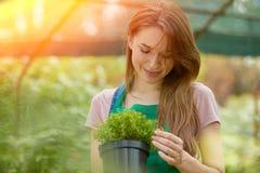 Mulher com planta em pasta Imagens de Stock