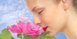 Mulher com Rosa cor-de-rosa Fotos de Stock
