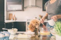 A mulher com seu cão está cozinhando na cozinha foto de stock