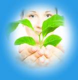 Mulher com um sprout Imagem de Stock Royalty Free