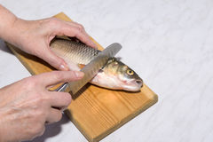 A mulher com uma faca cortou acima as escalas de peixes, mãos Fotos de Stock Royalty Free