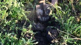 A mulher com uma pá escava acima batatas filme