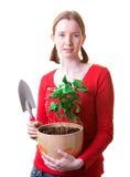 Mulher com uma planta Fotos de Stock