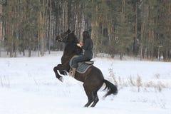 Mulher de cabelo preta nova na parte superior um cavalo de baía na floresta do inverno foto de stock