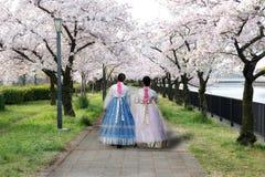 Mulher de dois asiáticos vestindo o vestido nacional coreano andando no parque imagens de stock