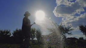 Mulher de meia idade delgada em Panamá que molha seu jardim no por do sol no slo-mo video estoque