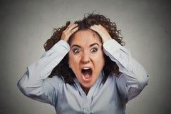 Mulher de negócio chocada frustrante que puxa o cabelo que grita para fora Imagem de Stock Royalty Free