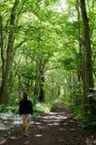 Mulher de passeio na floresta Foto de Stock Royalty Free