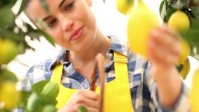 A mulher de sorriso escolhe um limão e põe-no na cesta filme