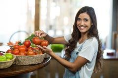 Mulher de sorriso que escolhe tomates frescos da cesta Foto de Stock