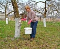 A mulher descora um tronco da Apple-?rvore A mola funciona em um jardim imagem de stock royalty free