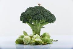 Mulher diminuta em uma planta dos brócolis Fotografia de Stock