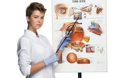 A mulher do ótico ou do oculista diz sobre a estrutura do olho Foto de Stock Royalty Free