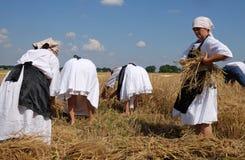 Mulher do camponês que colhe o trigo com foice fotografia de stock royalty free