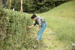 Mulher do jardim Fotos de Stock Royalty Free