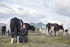 Mulher do Mongolian que ordenha uma vaca Foto de Stock