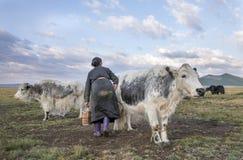 Mulher do Mongolian que ordenha uma vaca Fotos de Stock