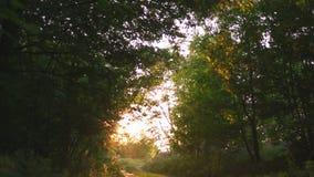Mulher do ruivo nas calças e na camisa branca que anda - país do por do sol fora da estrada com os raios de luz de nivelamento bo filme