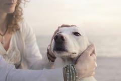 A mulher doce acaricia lovingly seu cão branco fotografia de stock