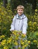 A mulher dos anos médios custa entre os arbustos de florescência de um mahonia de arrasto Imagens de Stock Royalty Free