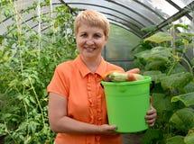 A mulher dos anos médios guarda à disposição uma cubeta com o vegetal na estufa Fotografia de Stock Royalty Free
