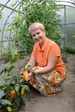 A mulher dos anos médios mostra frutos da pimenta doce na estufa Fotos de Stock Royalty Free