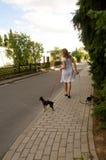 Mulher e dois cães pequenos. Imagem de Stock