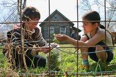 A mulher e a menina recolhem plantas medicinais perto da casa da quinta, Rússia Fotos de Stock Royalty Free