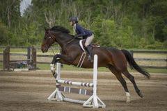 A mulher e o cavalo de baía saltam um vertical da prancha - vista lateral Foto de Stock