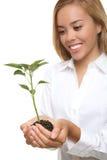 Mulher e planta bonitas do crescimento Imagens de Stock Royalty Free
