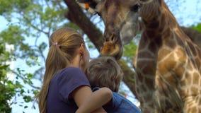 A mulher e seu filho alimentam um girafa em um parque do safari video estoque