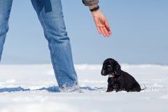 A mulher e o filhote de cachorro têm o divertimento na neve Imagens de Stock