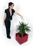 Mulher e uma planta Foto de Stock Royalty Free