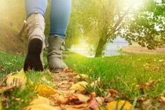 Mulher em sapatas e em calças de brim cinzentas que anda no trajeto de floresta do outono fotografia de stock