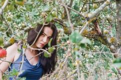Mulher em um vestido leve do verão quadro pelos galhos de árvores de maçã dentro imagem de stock
