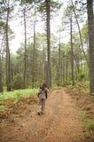 Mulher entre grandes árvores Fotografia de Stock Royalty Free