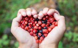 A mulher entrega guardar bagas frescas maduras da floresta do punhado na forma do coração Mirtilo e morango silvestre na palma hu Fotos de Stock