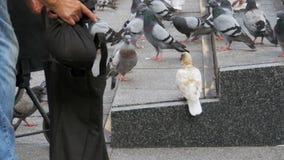 A mulher está alimentando pombos na rua vídeos de arquivo