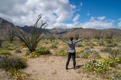 A mulher está no parque estadual do deserto de Anza Borrego, enfrentando montanhas, em um campo de wildflowers do deserto durante imagem de stock royalty free