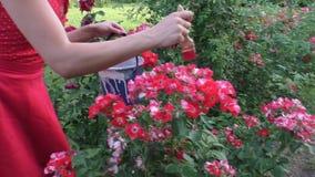 A mulher está pintando flores video estoque