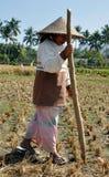 A mulher está plantando o arroz Fotografia de Stock