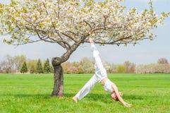 A mulher est? praticando a ioga, fazendo a pose de Ardha Matsyendrasana perto da ?rvore da flor imagem de stock royalty free