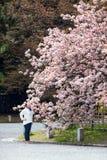 A mulher europeia aspira flores da árvore de florescência de sakura no jardim central de Kyoto, Japão Foto de Stock