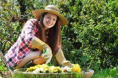 Mulher feliz bonita que jardina entre flores Imagem de Stock