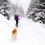 Mulher feliz que anda em madeiras do inverno com cão Imagem de Stock