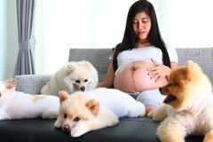Mulher grávida e animais de estimação bonitos do cão pomeranian na sala de visitas Fotos de Stock