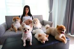 Mulher grávida e animais de estimação bonitos do cão pomeranian na sala de visitas Fotografia de Stock