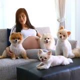 Mulher grávida e animais de estimação bonitos do cão pomeranian na sala de visitas Imagem de Stock Royalty Free