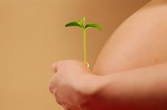 Mulher gravida com planta nova Imagem de Stock Royalty Free