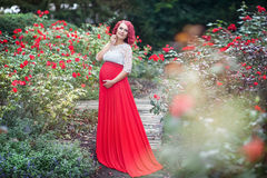 Mulher gravida nova bonita que anda no campo das rosas Foto de Stock